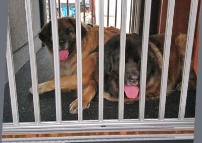 Obek Hundegittertüre auf einer Bodenerhöhung